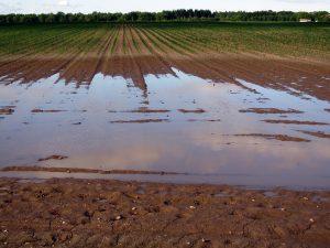 液状化した土地